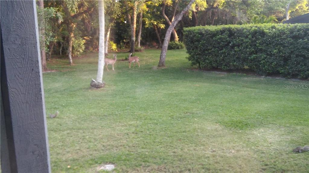 Deer in back yard. - Single Family Home for sale at 7536 Weeping Willow Dr, Sarasota, FL 34241 - MLS Number is A4210209