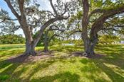 Beautiful park in front of the home is the setting for spectacular oaks, wildlife of all types and serene ponds. - Single Family Home for sale at 3313 Founders Club Dr, Sarasota, FL 34240 - MLS Number is A4169443